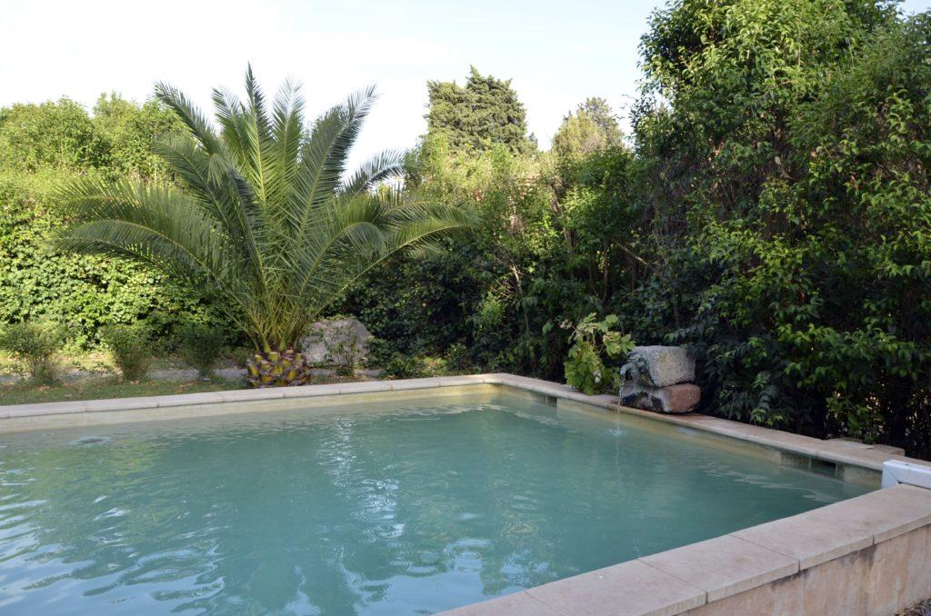 autre vue de la piscine, du palmier